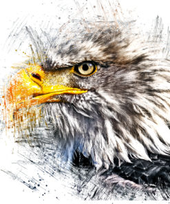 Seeadler Ink Art Bild