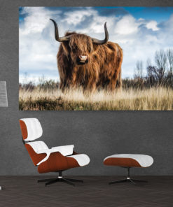 Highlands Bull Galeriebild
