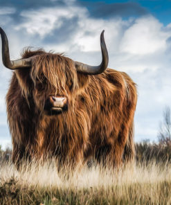 Highlands Bull Wall Art
